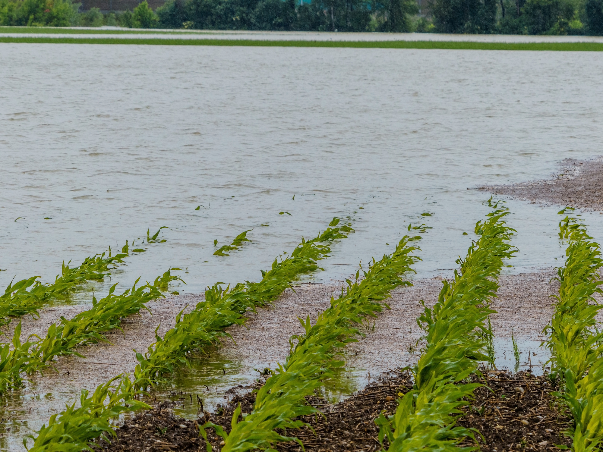flood 2013. austria. flooding and floods in agriculture